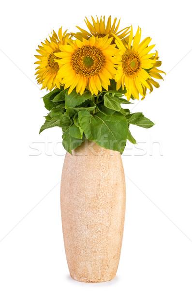ひまわり セラミック 花瓶 孤立した 白 緑 ストックフォト © digitalr