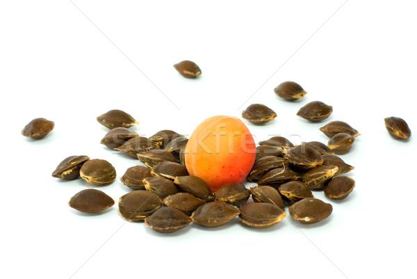 Single apricot over some kernels Stock photo © digitalr