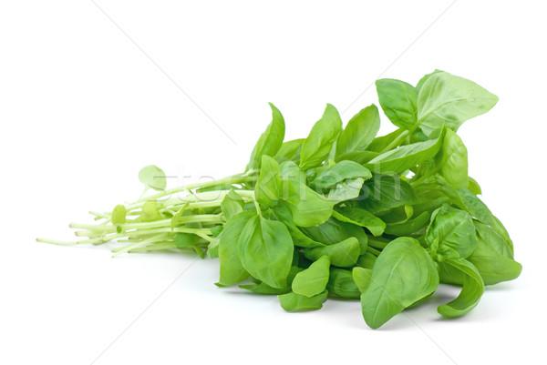 緑 バジル 孤立した 白 葉 甘い ストックフォト © digitalr