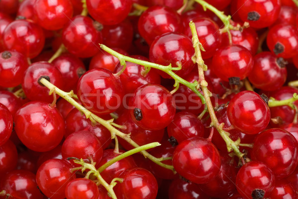 Redcurrants Stock photo © digitalr