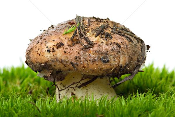 Geel paddestoel groene mos geïsoleerd witte Stockfoto © digitalr