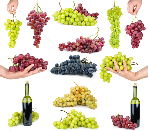 Set of different grapes Stock photo © digitalr