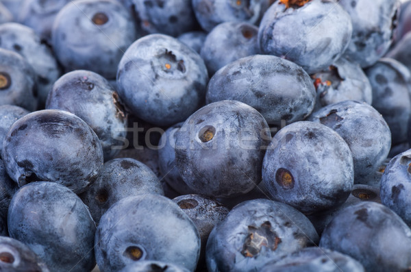 Bilberries background Stock photo © digitalr