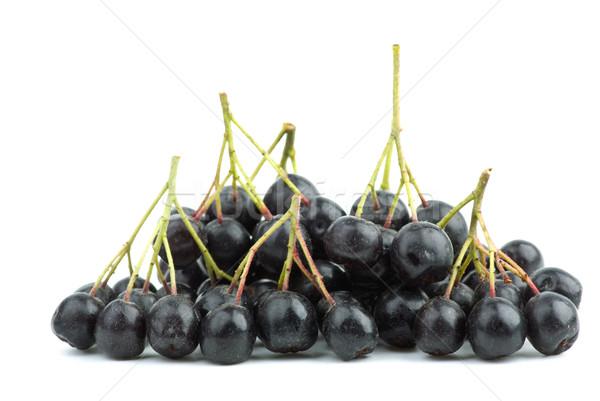 Few black chokeberry clusters Stock photo © digitalr