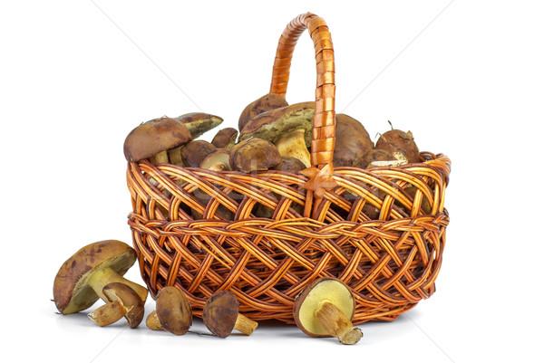Mand Geel paddestoel champignons geïsoleerd Stockfoto © digitalr