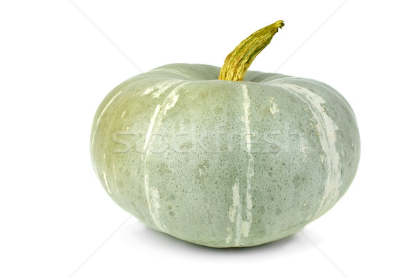 Unripe green pumpkin Stock photo © digitalr