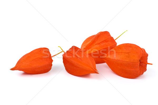 Four winter-cherries Stock photo © digitalr