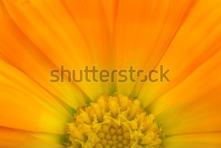 Calendular sun Stock photo © digitalr
