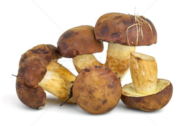 Eetbaar champignons Geel paddestoel witte voedsel Stockfoto © digitalr