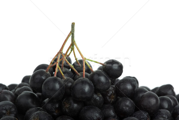 Stock photo: Black chokeberry cluster on top of berries pile
