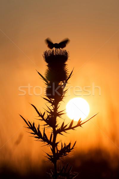 çiçek güzel gün batımı doğa yaprak Stok fotoğraf © digoarpi