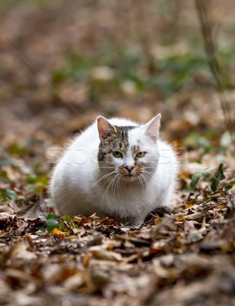 Stok fotoğraf: Beyaz · kedi · sonbahar · yaprakları · saç · yeşil · komik