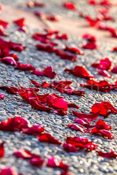 Rose petals Stock photo © digoarpi