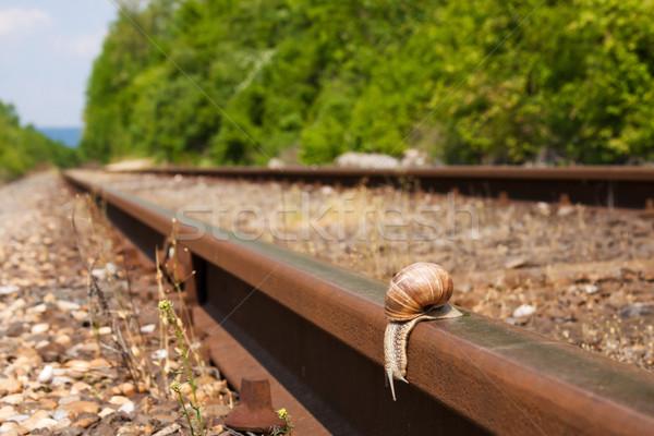 Snail Stock photo © digoarpi
