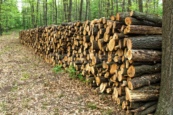 Büyük ahşap orman yol ağaç Stok fotoğraf © digoarpi