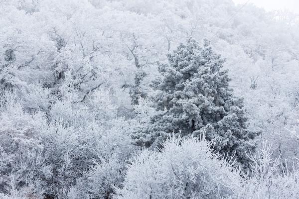 Zamrożone lasu mętny zimno dzień Węgry Zdjęcia stock © digoarpi