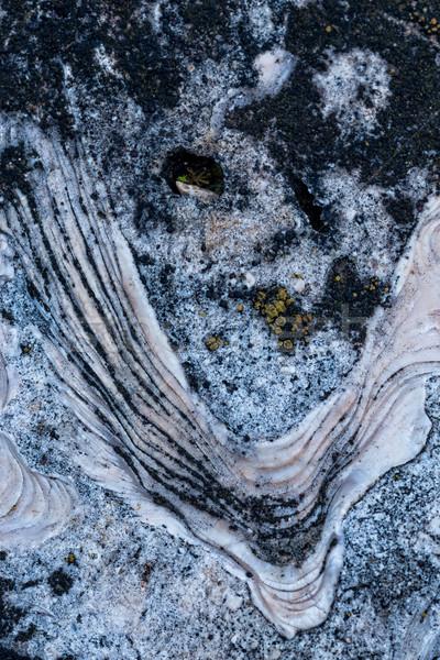 Kövület közelkép felület kő tenger Stock fotó © digoarpi