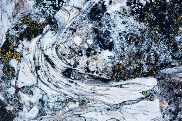 Fosil yüzey taş deniz Stok fotoğraf © digoarpi