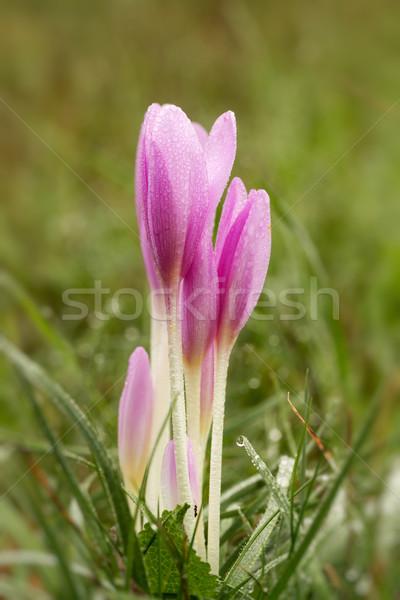 çiçek güzel sonbahar orman doğa ışık Stok fotoğraf © digoarpi