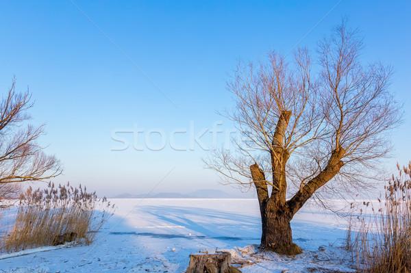 Foto stock: Belo · inverno · paisagem · lago · Balaton · Hungria