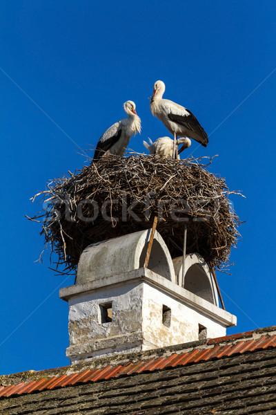 Bella famiglia nido home piuma bianco Foto d'archivio © digoarpi
