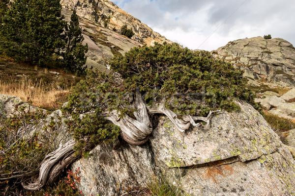 Tree Stock photo © digoarpi