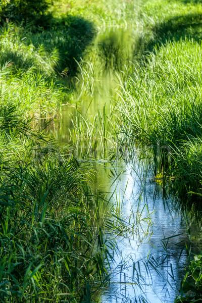 ручей пейзаж небольшой лет зеленый Сток-фото © digoarpi