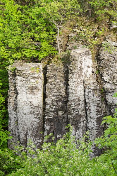 Basalt Baum Wald Natur Berg grünen Stock foto © digoarpi