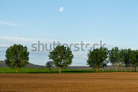 Plough land Stock photo © digoarpi
