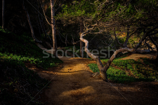 Mystical forest detail with nice sunlight Stock photo © digoarpi