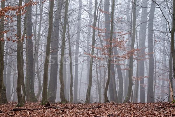 Autumntime Stock photo © digoarpi