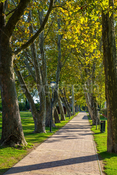 Nice platan trees in row near the lake Balaton in Hungary , village Balatongyorok Stock photo © digoarpi