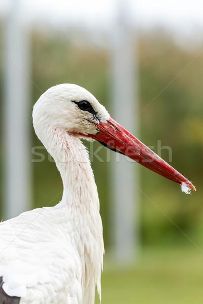 Stock photo: White stork
