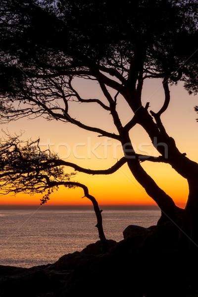 Beautiful sunset over the ocean Stock photo © digoarpi