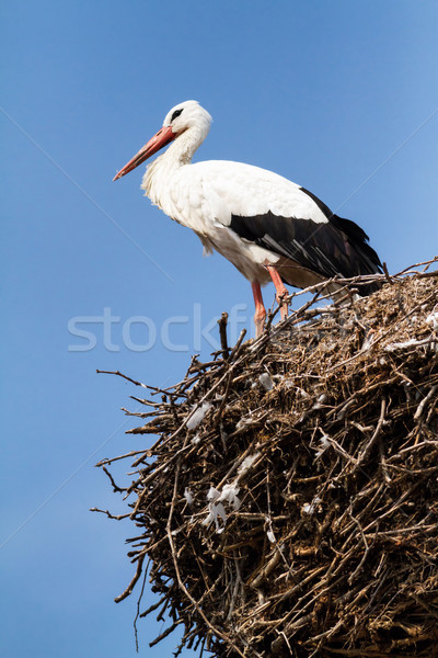 Cicogna bella famiglia nido home piuma Foto d'archivio © digoarpi