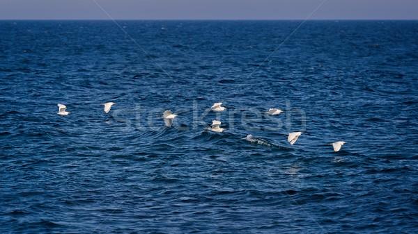 Vee groep oceaan vogel golf witte Stockfoto © digoarpi