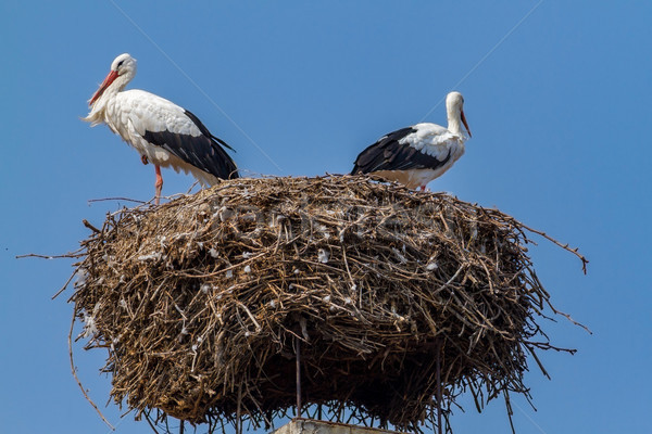 гнезда весна семьи фон красоту птица Сток-фото © digoarpi