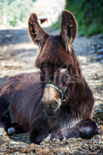 Fazenda burro retrato olho natureza boca Foto stock © digoarpi