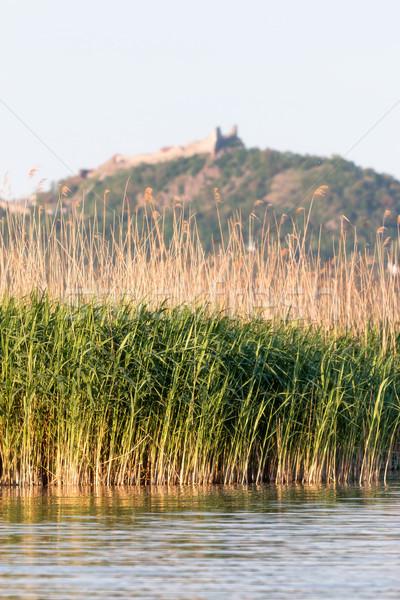 Reed landscape  Stock photo © digoarpi