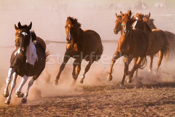 Nyáj szép természet ló tájkép homok Stock fotó © digoarpi