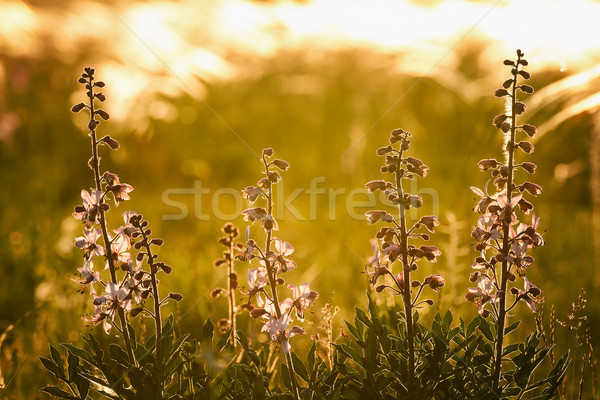 Beautiful flower Stock photo © digoarpi