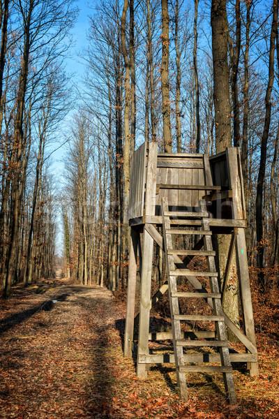 Suporte floresta paisagem verde veado torre Foto stock © digoarpi