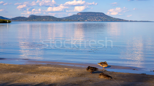 Paysage lac Balaton sauvage Hongrie mer Photo stock © digoarpi
