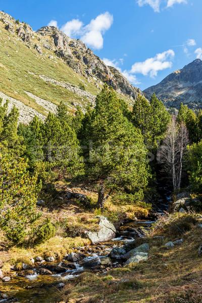 Berg mooie Andorra boom gras zonsondergang Stockfoto © digoarpi