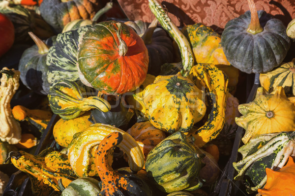 Different kinds of pumpkins in sunshine; Offer at weekly market Stock photo © digoarpi