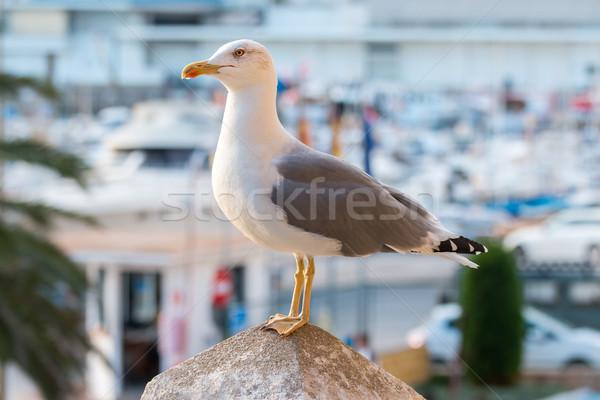 Martı doğa deniz kuş kaya Stok fotoğraf © digoarpi