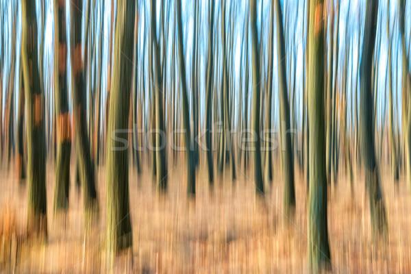 Zamazany streszczenie zdjęcie lasu jesienią czasu Zdjęcia stock © digoarpi