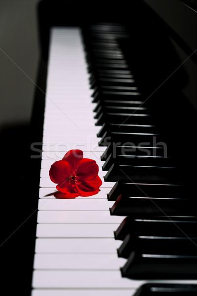 Piano  Stock photo © digoarpi