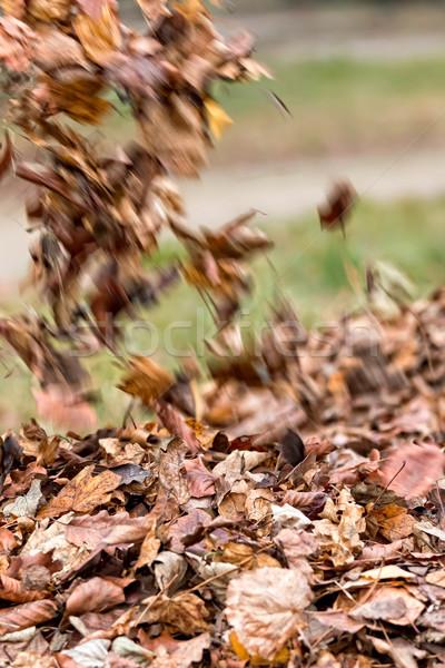 Leaves litter  Stock photo © digoarpi