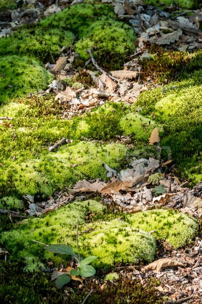 Yeşil yosun orman bahar doğa arka plan Stok fotoğraf © digoarpi